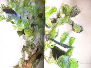Cactus Sketch_awidman